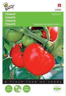 Graines de Tomate Pyros Hybride F1