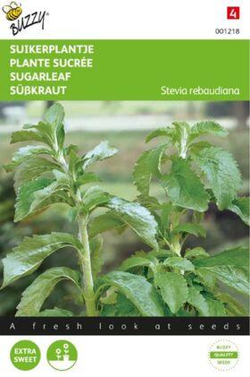 Stévia Rebaudiana / Plante Sucrée